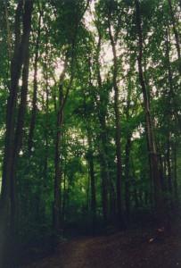På Skovtur i udkanten af Odense.