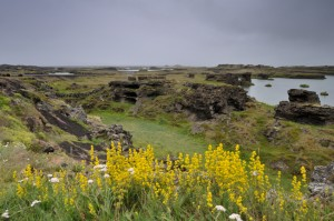 Landscape view at Myvatn.